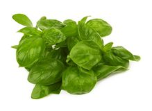Basil leaves isolated. On a white background stock images