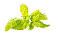 Basil leaves isolated on a white background Stock Photo