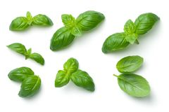 Basil Leaves Isolated on White Background royalty free stock photography