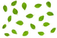 Basil Leaves Isolated on White Background stock images