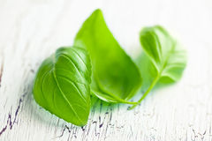 Basil leaves. On old table Royalty Free Stock Photography