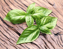 Basil leaves on old wood. Royalty Free Stock Photo