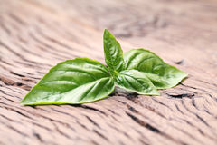 Basil leaves on old wooden table. Stock Photo