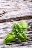 Basil leaves on a old wooden table Stock Photography