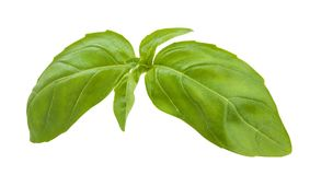 Basil leaves. Path isolated on white Stock Photos