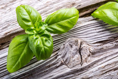 Basil leaves pepper and pasta on a old wooden table Royalty Free Stock Photos