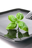 Basil leaves on a plate Stock Photography