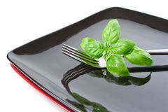 Basil leaves on a plate Royalty Free Stock Photos