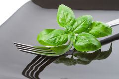 Basil leaves set with fork on plate Royalty Free Stock Photo
