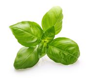 Basil leaves spice closeup. Isolated on white background Stock Photo