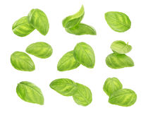 Basil leaves spice closeup isolated on white background. Basil leaves spice closeup isolated on white background, with clipping path Stock Images