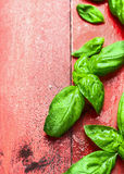 Basil leaves with water drops on red wooden background Stock Photography