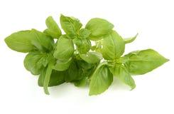 Basil leaves on white Stock Image