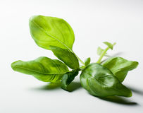 Basil leaves on white background Stock Photos