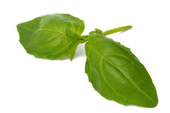 Basil leaves on white Royalty Free Stock Photos