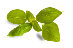 Basil leaves on white Royalty Free Stock Images
