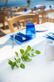 Basil leaves on a white wooden table with table appointments. Royalty Free Stock Image