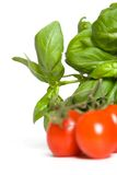 Basil likes tomato Stock Photography