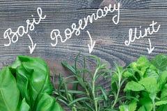 Basil, menthe, herbes de romarin avec le lettrage Les herbes vertes fraîches s'étendant sur le fond en bois, configuration d'appa Image stock