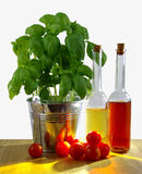 Basil in metal bucket with fresh tomatoes and olive bottle on ta Stock Image