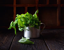 Basil in a metal mug on a dark wooden background Royalty Free Stock Image