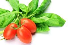 Basil and mini-tomato Royalty Free Stock Photo