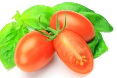 Basil and mini-tomato Royalty Free Stock Photography