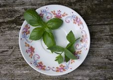 Basil and mint Stock Photo