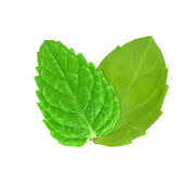 Basil and mint Royalty Free Stock Images