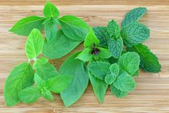 Basil and Mint leaves on a wooden background Royalty Free Stock Photo
