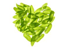 Basil minth leaves hearth shape isolated on white. Basil minth leaves transparent hearth shape isolated on white studio background Stock Image
