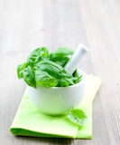 Basil in a mortar Royalty Free Stock Photo