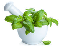 Basil in mortar isolated Royalty Free Stock Image