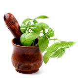 Basil in Mortar with Pestle Stock Photo