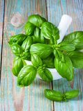 Basil Royalty Free Stock Images