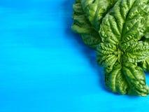 Basil na błękicie Zdjęcia Stock