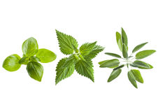 Basil, Nettle And Sage Stock Images