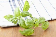 Basil (ocimum basilicum) stock images