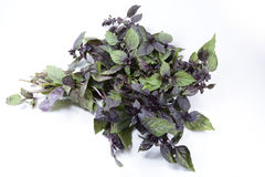 Basil. & x28;Ocimum basilicum& x29;, also called great basil or Saint-Joseph& x27;s-wort, is a culinary herb of the family Lamiaceae & x28;mints& x29 Stock Photos