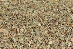 Basil (ocimum basilicum) Stock Photo