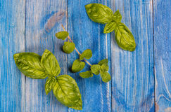 Basil and oregano Royalty Free Stock Image