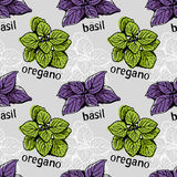 Basil and oregano pattern Stock Images