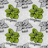 Basil and oregano pattern Royalty Free Stock Photo