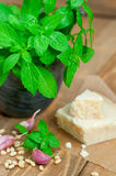 Basil and parmesan Stock Images