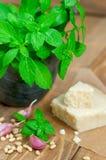 Basil and parmesan Stock Images