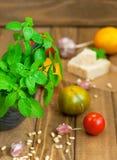 Basil and parmesan Royalty Free Stock Image