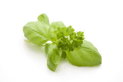 Basil and parsley Royalty Free Stock Photography