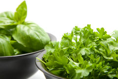 Basil and parsley Stock Photography