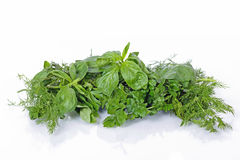 Basil, parsley and dill Royalty Free Stock Image