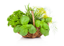 Basil, parsley and dill in wicker basket Royalty Free Stock Images